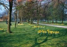 Cassiobury Park Spring 1957