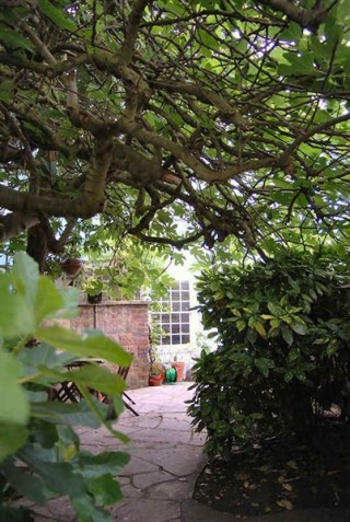 Garden of Fig Tree cottage | John Smith (photographer)